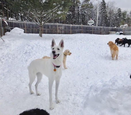 Dog Daycare in South VT