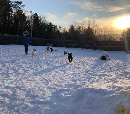 Dog Daycare South Vermont